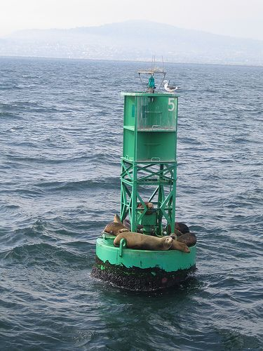 Sea lions on green buoy